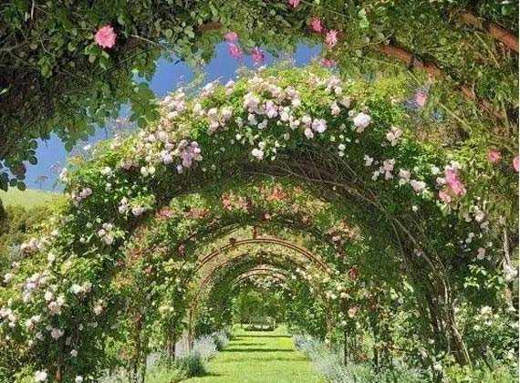 春天来了,植物廊架做起来~
