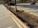 机场候机门口停车场绿化带应该种什么