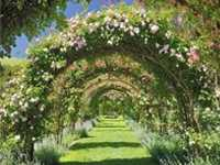 春天,植物廊架做起来