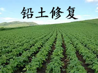【干货】植物修复铅污土壤,如何选择?