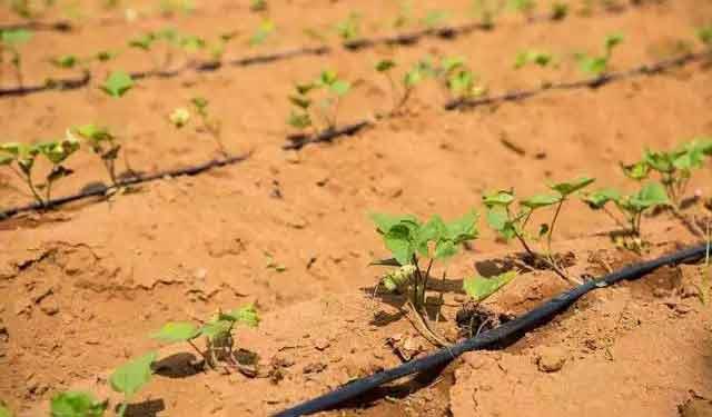 水土保持农业技术——集雨灌溉