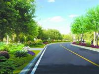 """阜城将建7条能吸水的""""海绵道路"""""""