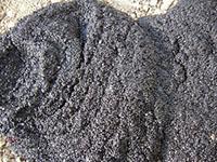 【讨论】新运来的活性污泥看不到微生物